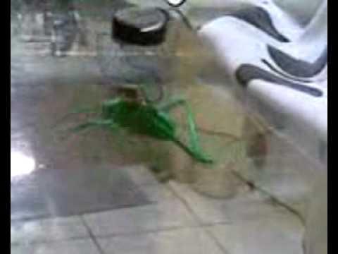 Robô inseto