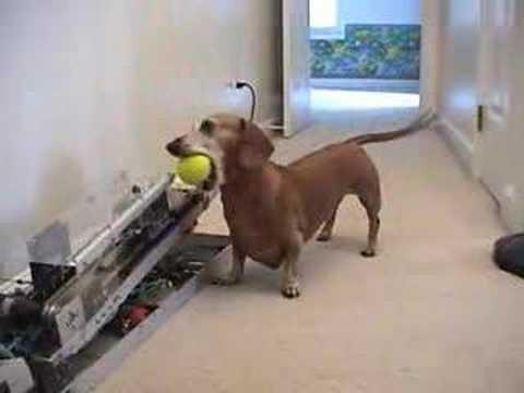Jogar bolinha para cachorro