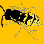 KipYellowjacket
