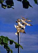 flight_of_geese