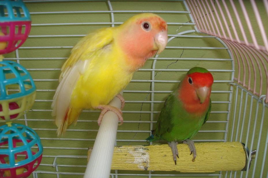 Paulie & Suny