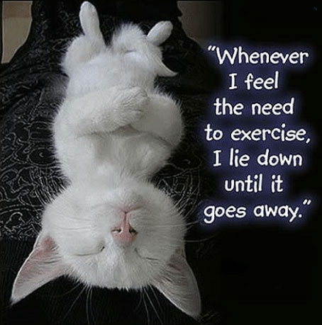 """Whenever I feel the need to exercise, I lie down until it goes away. (with white cat asleep on its back)"""
