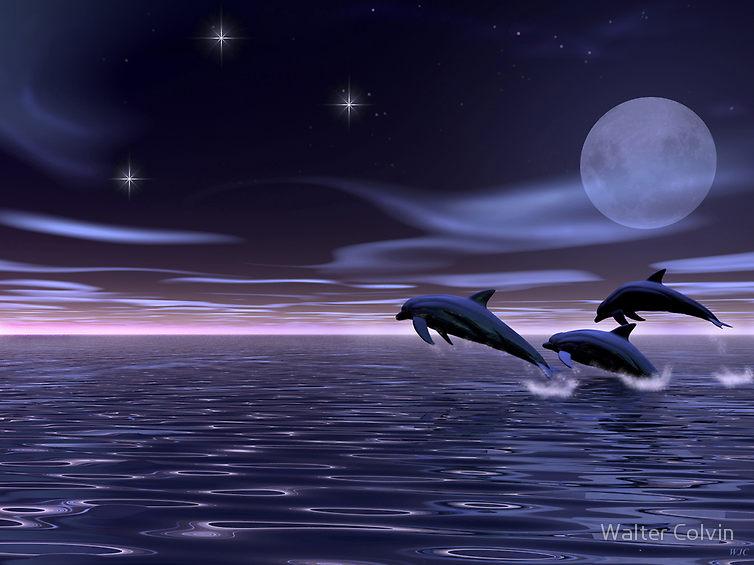 405327-6-dolphin-moon