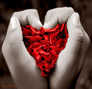 flor-amor