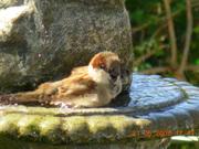 Flôres e pássaros 038