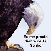 aves-9116