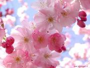 flores_-5049
