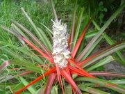 natureza na trilha de Guaratuba