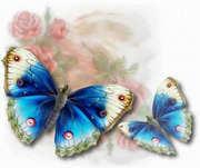 borboleta017