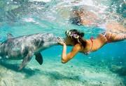 golfinho e mulher