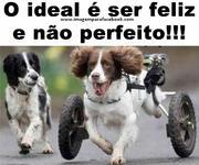 O ideal é ser feliz e não perfeito