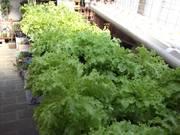 meu projeto:horta na laje