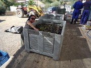 3 day olive picking and cooking break