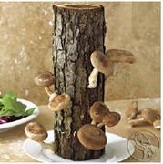 KJM Mushroom Workshop
