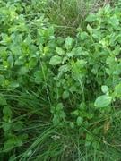 We Love Weeds - Foraging 101 with Garden Understories