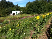 Place-Based Activism and Spiritual Practice : FARM DAY