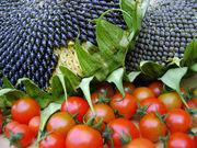 *Introduction to Organic  Food Gardening