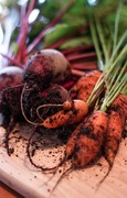 Veggies - What to Grow and When to Sow