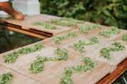 Growing Microgreens for Home Consumption