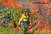Prescribed Fire in Florida
