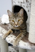 Cat MOT