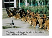 Psalm 23 - right attitude of a Christian when 'walking through the shadow of...