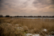 Event about Future Plans for Woodberry Wetlands