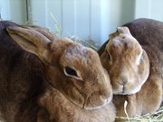 Rabbit MOT £5
