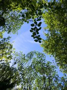 Railway Fields Summer Holiday Activities: Poe-tree (Poetry)