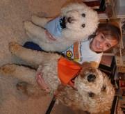 My Bella ( white) and Bailey and Natalya