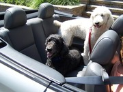 Casey & Caleb Going for a ride in their car!