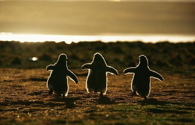 სასწაული, დაბადება, ბუნება, დედამიწა, შობა, ცხოველები, ფრინველები, ქველი, Qwelly, earth, dedamiwa, fauna, animals, born, babes, cxovelebi