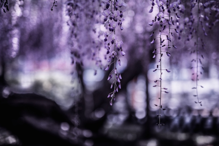 sun, მზის ქვეყანა, ამომავალი მზის ქვეყანა, იაპონია, ფოტოგრაფია, ქველიგრაფია, ქველი, japan, landscape, nature, photographer, photography, qwelly, პეიზაჟი, ფოტოგრაფია, პეიზაჟი