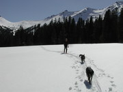 Spring Skiing above Cooke City