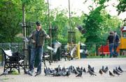 Feeding The Birds in Finsbury Park