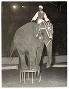 Sabu at Harringay Circus, 1951