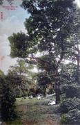 Idyllic Edwardian Scene in Queens Woods c1905
