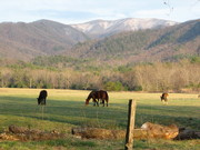 Early Spring in Cades Cove