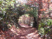 91 - Tree Arch Along Crooked Arm Ridge Trail