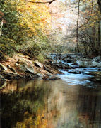 fall treemont