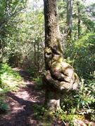 Trailguard