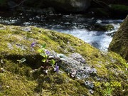 Wildflower rock at Big Creek
