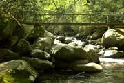Porter's Creek Foot Bridge