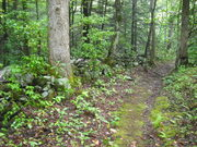 grapeyard and injun creek 038