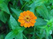 flower pic 017