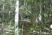 nature trail 034