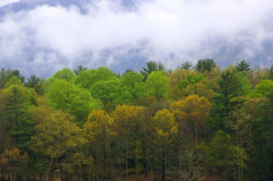 Shades of Spring and Smoke
