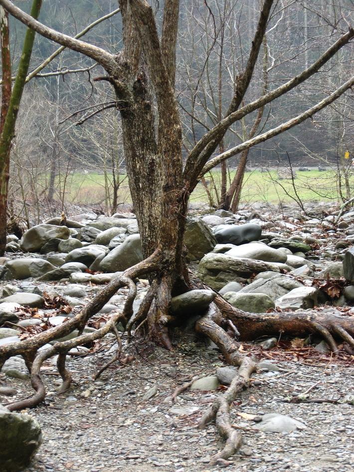 tree '08