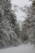 Parson's Branch Road