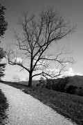 "Black & white of ""the tree"""